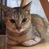 おちゃめで可愛い♪パステルカラー美猫 サムネイル7