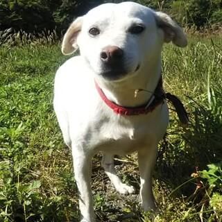 白犬中型犬14kg8歳警戒心強め