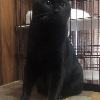 わがままボディの甘えた君 黒猫 すえきち 11ヶ月