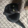 わがままボディの甘えた君 黒猫 すえきち 11ヶ月 サムネイル7