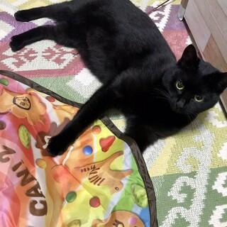 【トライアル決定一時停止】黒猫さん♪
