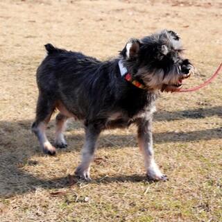 譲渡対象犬のご紹介 0112-1