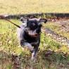 譲渡対象犬のご紹介 0112-1 サムネイル3