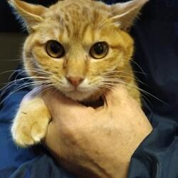 2/21市川市地域猫活動団体ウイング譲渡会開催