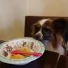 パピヨン6歳★ミミちゃん 繁殖引退犬 サムネイル3