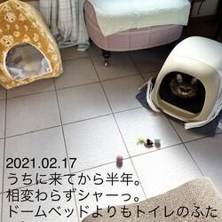 2021.02.17 猫 今日の様子
