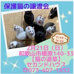 猫の道草&NPO法人WITH DOG合同保護猫の譲渡会