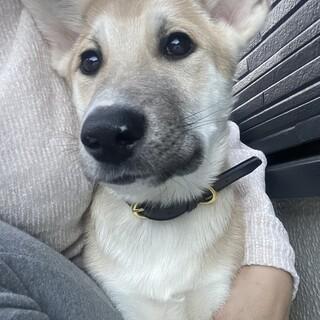 野犬子犬⚪︎甘えん坊生後4ヶ月ルイくん