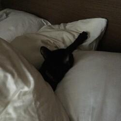 てっちゃん、枕はんぶんこ