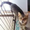 顔が変形している猫、1匹飼い希望