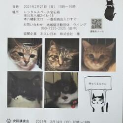 2/21市川市地域猫活動団体ウイング譲渡会 サムネイル1
