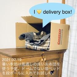 カバーなしの猫ベッド