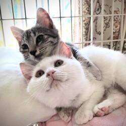 おきなわ美ら猫譲渡会 in 天白区