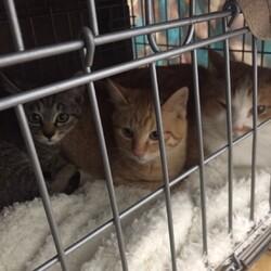 猫の譲渡会 IN 豊明 ~ ちーむ にゃいんず 2021年2月27日開催 サムネイル2