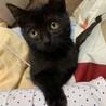 甘えん坊の黒ネコ君3ヶ月