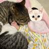 umashika_cats さん
