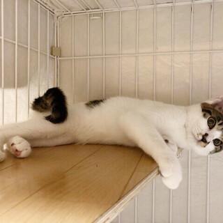 【募集一時停止中】大人しい控えめ子猫サバシロー!