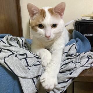 【丸餅】少しビビりな白地茶トラ斑子猫