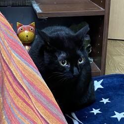 飼っている猫同士のケンカの悩み