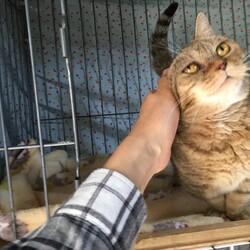 ねこの手の会【猫の譲渡会開催】2月28日(日)13時30分〜15時30分【予約制】参加猫