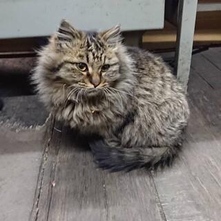 保護猫を迎えませんか?
