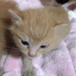 昨年 親猫共々保護した子猫たちNo2