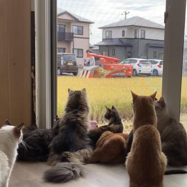 猫カフェ 柚の家のカバー写真