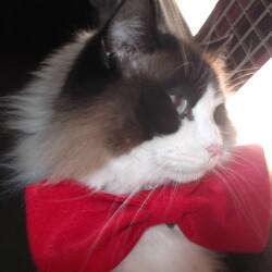 猫の日・赤いリボンの日