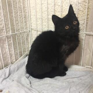 可愛い 黒猫 セーラちゃん