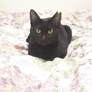 猫好きな黒猫ジュリちゃん