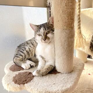 うさぎちゃん、子猫に好かれるまったり猫【動画】