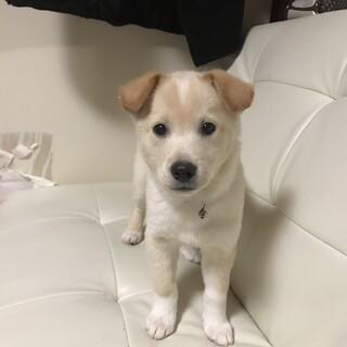 3ヶ月男の子★キレイなクリーム色