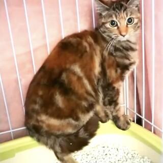 虐待犯から守る為緊急保護した子猫