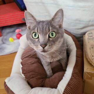グレー猫 メロンくん