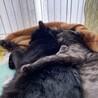人も猫も大好きな、ルルちゃん サムネイル5