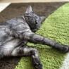 人も猫も大好きな、ルルちゃん サムネイル6
