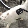 【急募❗️】三重県伊勢市オスの白猫【人懐っこい】 サムネイル7