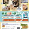❤️人慣れ◎穏やか♂【2/28譲渡会】 サムネイル6