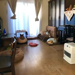 元野犬3頭中型犬の室内飼育