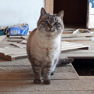 トライアル決定!浸水被害住居に残された猫たち③
