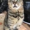 棄てられてた猫の里親募集