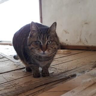 【緊急】浸水被害住居に残された猫たち②