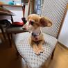 飼育放棄犬9歳のモカちゃん