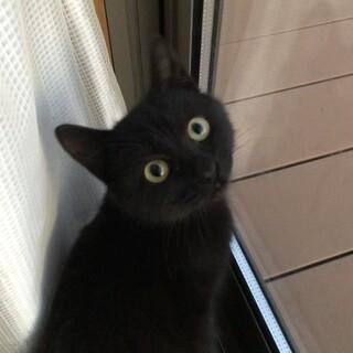 野良の子猫の里親募集です。