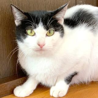 シャイな白黒猫『クルト』