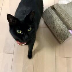 黒猫さん 備忘録5