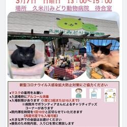 保護猫の譲渡会❤️久米川みどり動物病院