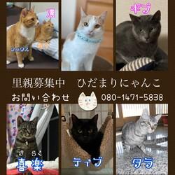 保護猫の譲渡会 サムネイル2