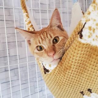 愛嬌たっぷり♡人も猫も大好き☆生後10か月