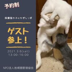子猫&中猫のお見合い会